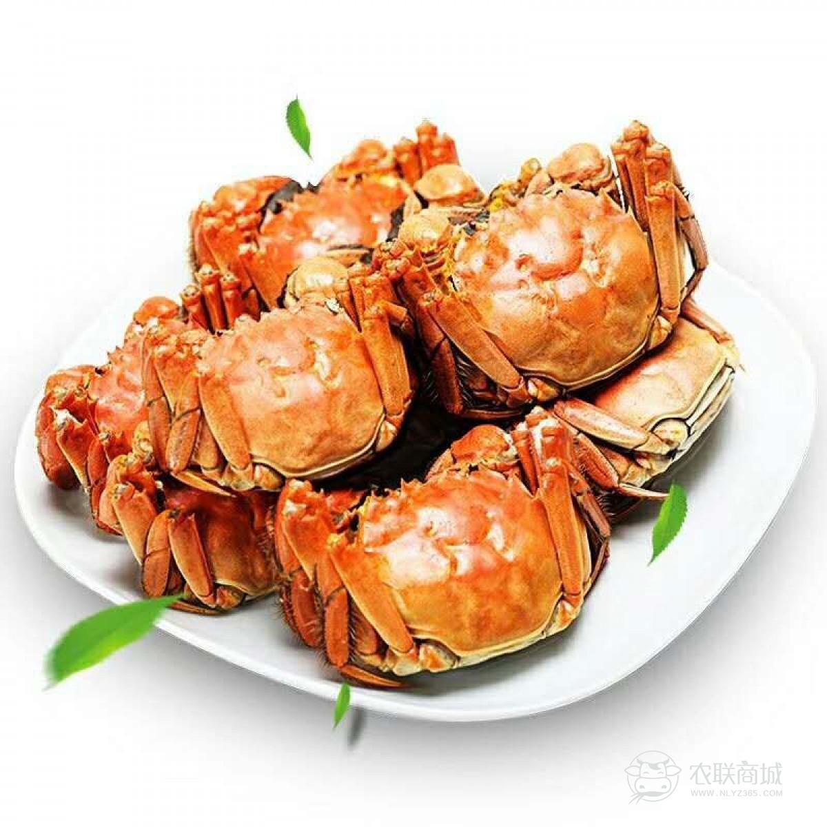 阳澄湖大闸蟹2198型提货券 公蟹4.5两/只 母蟹3两/只 5对10只螃蟹礼盒提货卡 海鲜水产