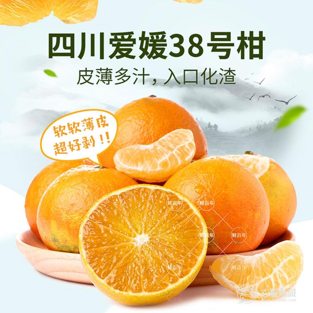 四川爱媛38果冻橙 5斤装中果 13颗-16颗
