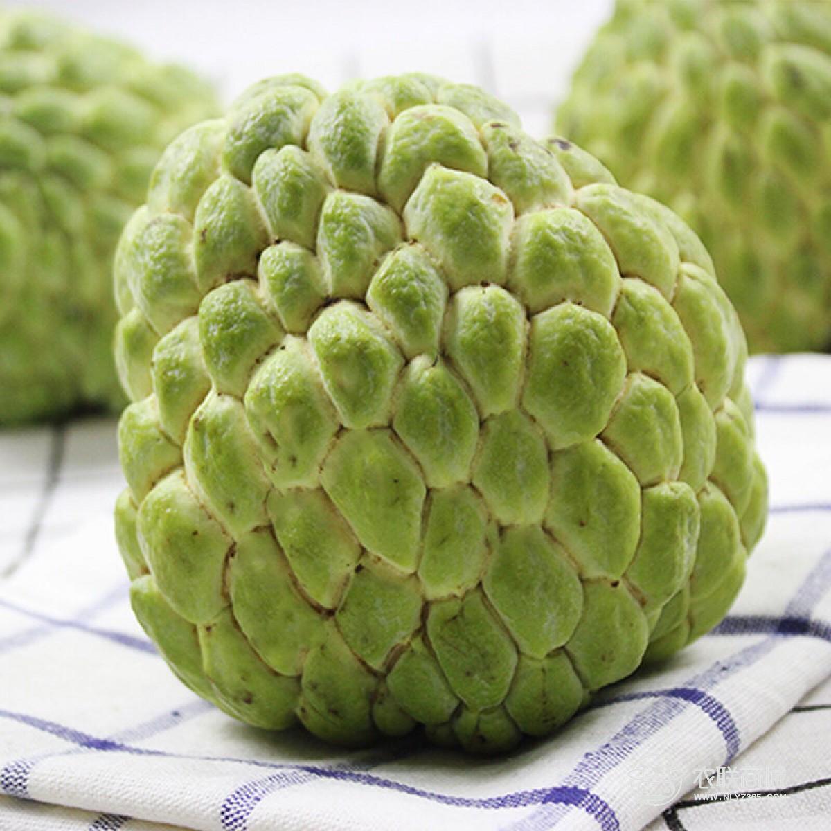 攀枝花米易释迦果5斤装小果 12-15个