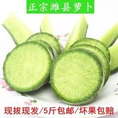 潍坊萝卜 山东特产潍县青萝卜水果萝卜现拔新鲜萝卜脆甜5斤包邮