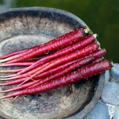 紫胡萝卜水果黑萝卜新鲜蔬菜农产品五斤包邮 约15-20根