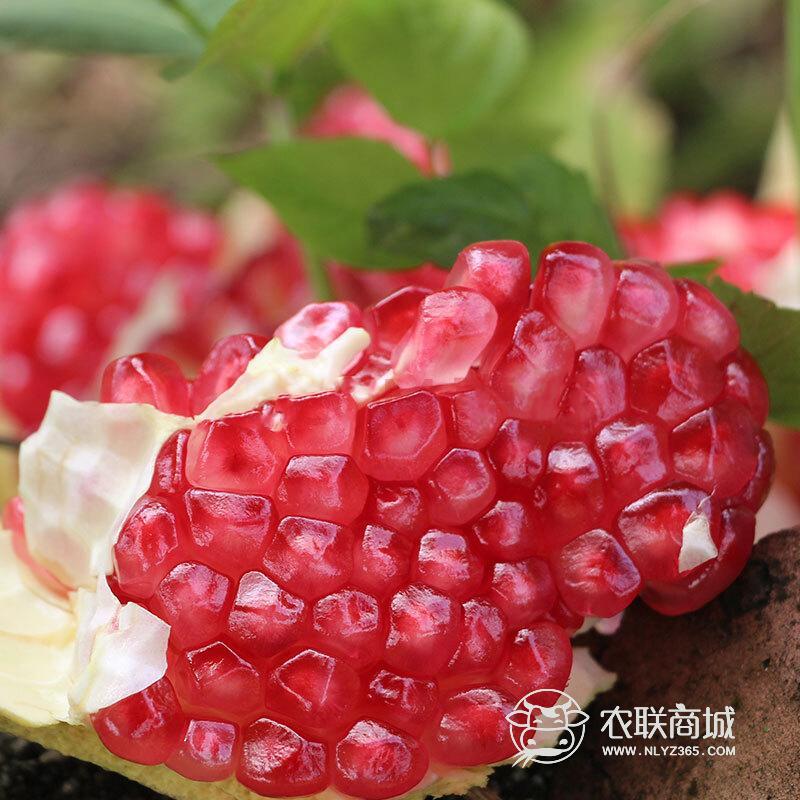 攀枝花水晶石榴(硬籽)5斤装 包邮