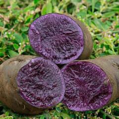 山东新鲜蔬菜农家紫色土豆黑金刚土豆 5斤装